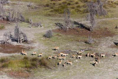 https://imgc.allpostersimages.com/img/posters/aerial-view-of-red-lechwe-kobus-leche-okavango-delta-botswana-africa_u-L-PQ8MXN0.jpg?p=0