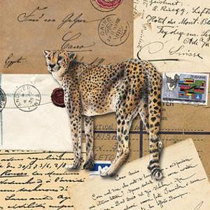 AFrica Cheetahs