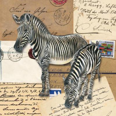Africa Zebras