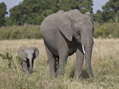 https://imgc.allpostersimages.com/img/posters/african-elephant-mother-and-young-masai-mara-national-reserve_u-L-P91KXB0.jpg?artPerspective=n