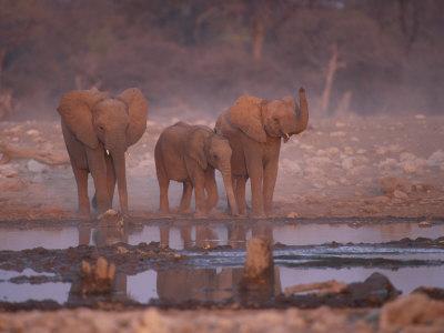 https://imgc.allpostersimages.com/img/posters/african-elephants-at-water-hole-etosha-np-namibia_u-L-Q10O24M0.jpg?p=0