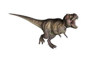 Aggressive Tyrannosaurus Rex Growling, White Background