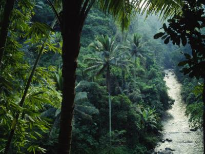 Agung River Cuts Through Desnse Jungle and Palm Trees
