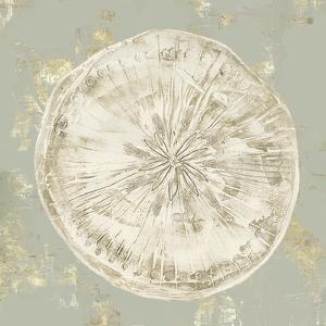 Cone Shells II by Aimee Wilson