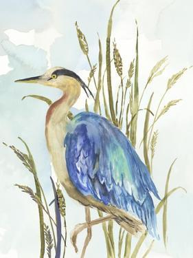 Little Blue Heron by Aimee Wilson