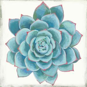 Pastel Succulent II by Aimee Wilson