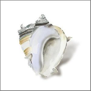 Seafoam Shell by Aimee Wilson