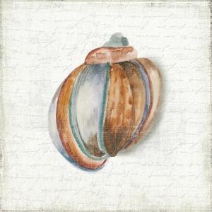 Seashell Portrait II by Aimee Wilson