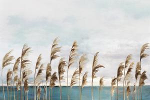 Summer Wind III by Aimee Wilson