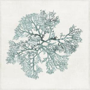 Teal Coral II by Aimee Wilson