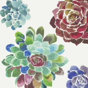 Water Succulents I by Aimee Wilson