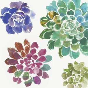 Water Succulents II by Aimee Wilson