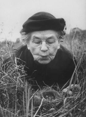 Mrs. Margaret Morse Nice Lying Flat in Grass to Study Nest of Baby Field Sparrows by Al Fenn