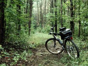 A Bike Rests on a Woodland Trail by Al Petteway
