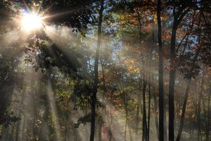 Morning Sunlight Filters Through Autumn Trees by Al Petteway