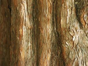 Tree Bark by Al Petteway