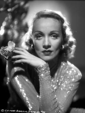 Marlene Dietrich Posed in Glossy Classic Sweater by AL Schafer