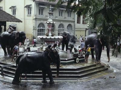 Bathing Elephants in Fountain, Kandy, Sri Lanka