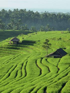 Landscape of Lush Green Rice Terraces on Bali, Indonesia, Southeast Asia by Alain Evrard