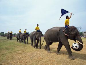 Line of Elephants in a Soccer Team During November Elephant Round-Up Festival, Surin City, Thailand by Alain Evrard