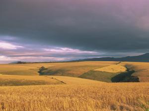 Overberg Landscape, Western Cape, South Africa, Africa by Alain Evrard