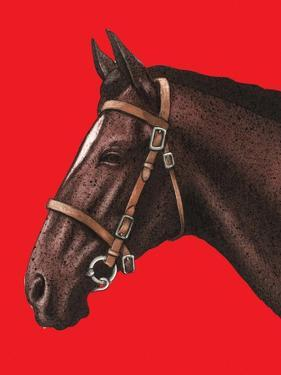 Close-Up of Horse on Red Background by Alan Baker