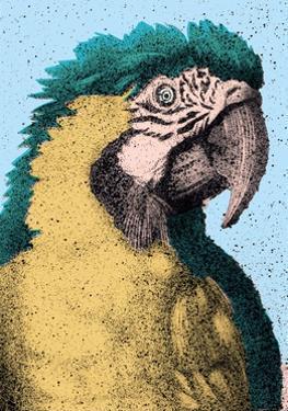 Portrait of Macaw by Alan Baker