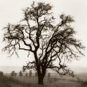 Country Oak Tree by Alan Blaustein