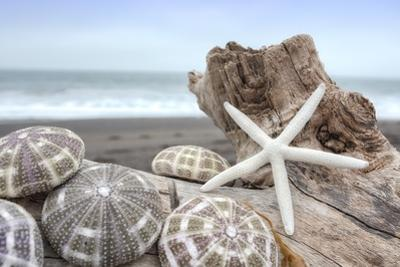 Crescent Beach Shells 5 by Alan Blaustein