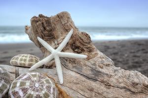 Crescent Beach Shells 6 by Alan Blaustein