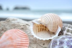 Crescent Beach Shells 9 by Alan Blaustein