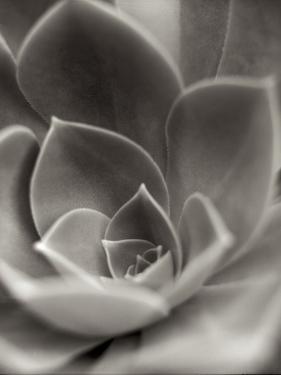 Florison 25 by Alan Blaustein