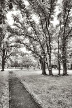 Garden Pathway No.1 by Alan Blaustein