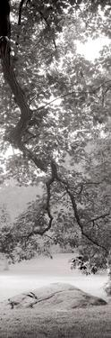 Hampton Field Tree I by Alan Blaustein