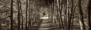 Hampton Gates Promenade II by Alan Blaustein