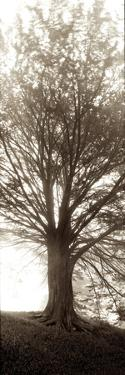 Hampton Gates Tree No. 1 by Alan Blaustein