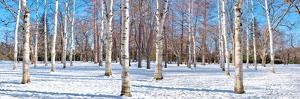 Hokkaido 1 by Alan Blaustein