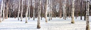Hokkaido 4 by Alan Blaustein