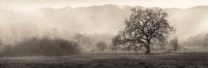 Meadow Oak Tree by Alan Blaustein