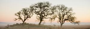 Oak Tree #30 by Alan Blaustein