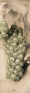 Pinot Blanc by Alan Blaustein