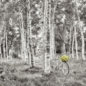 Sunflower Bicycle Ride by Alan Blaustein