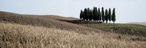 Val d'Orcia Pano #3 by Alan Blaustein