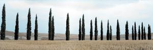 Val d'Orcia Pano #5 by Alan Blaustein