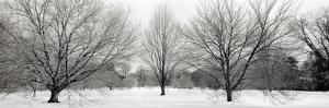 Winter Garden #1 by Alan Blaustein