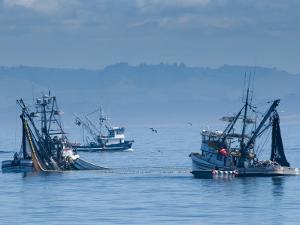 California, Monterey, Fishing Boats, USA by Alan Copson