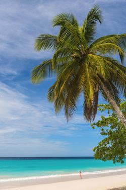 Caribbean, Barbados, Oistins, Miami Beach or Enterprise Beach by Alan Copson