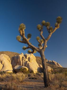 Joshua Tree National Park, California, USA by Alan Copson