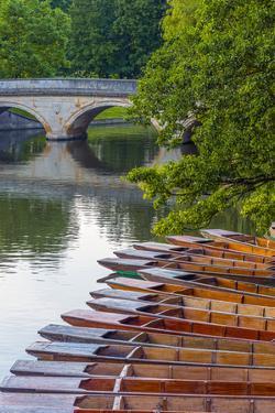 Punts on the River Cam, the Backs, Cambridge, Cambridgeshire, England, United Kingdom, Europe by Alan Copson