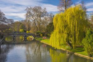 The Backs, River Cam, Cambridge, Cambridgeshire, England, United Kingdom, Europe by Alan Copson